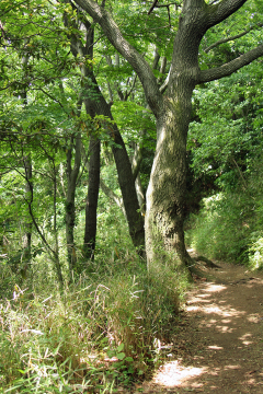 Kamariya_forest_13