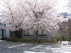 Cherry_12