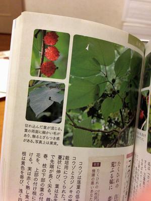 Noaruki_guide_02