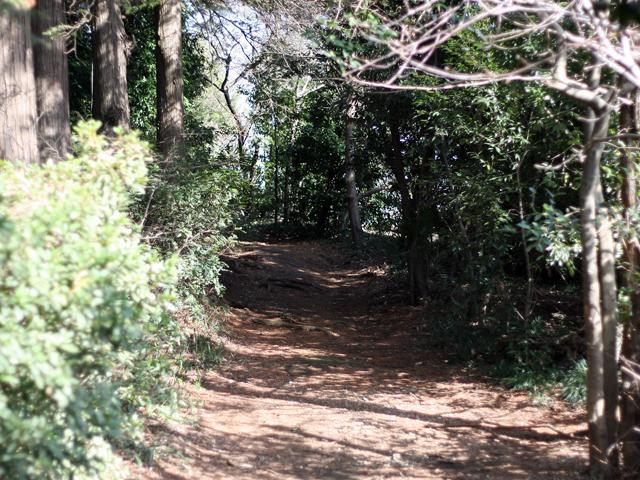 Yasashi_forest_02