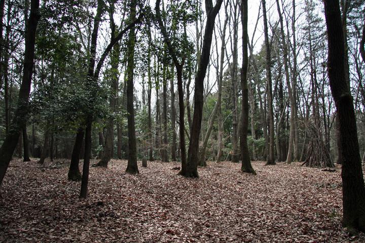 Seya_forest_05