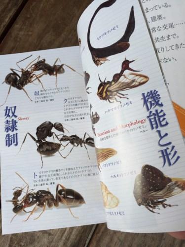 konchuuhasugoi_02
