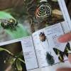 読んでみた記「昆虫はもっとすごい」(丸山宗利・養老孟司・中瀬悠太)