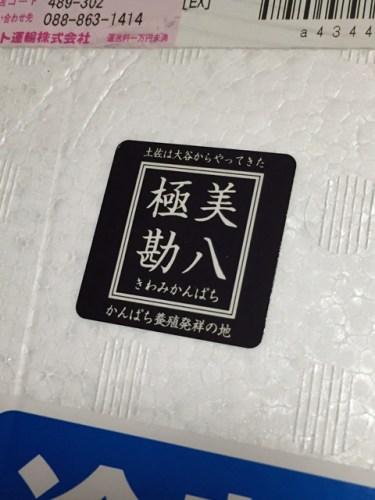 susaki_kanpachi_01
