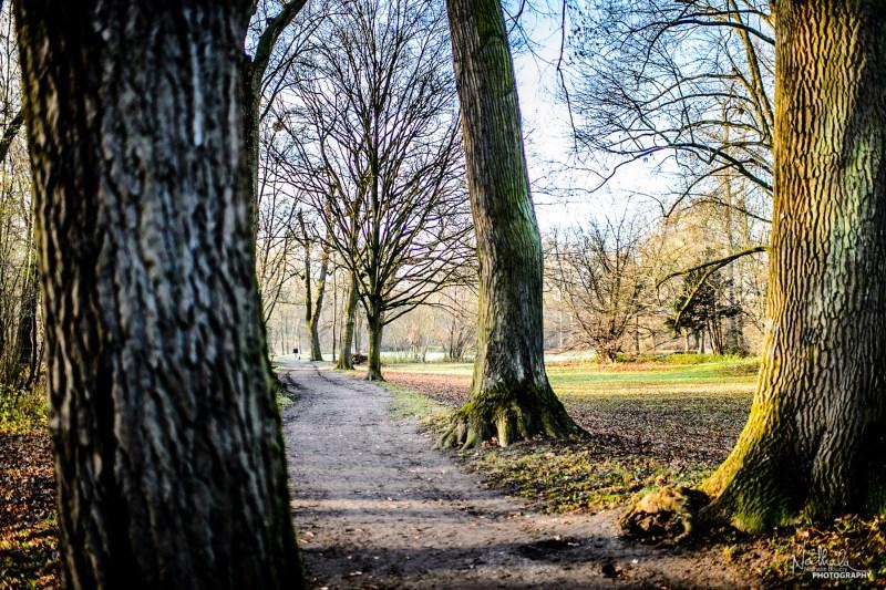 A Sunny Sunday Morning Stroll | Waldpark, Mannheim, Germany Dece