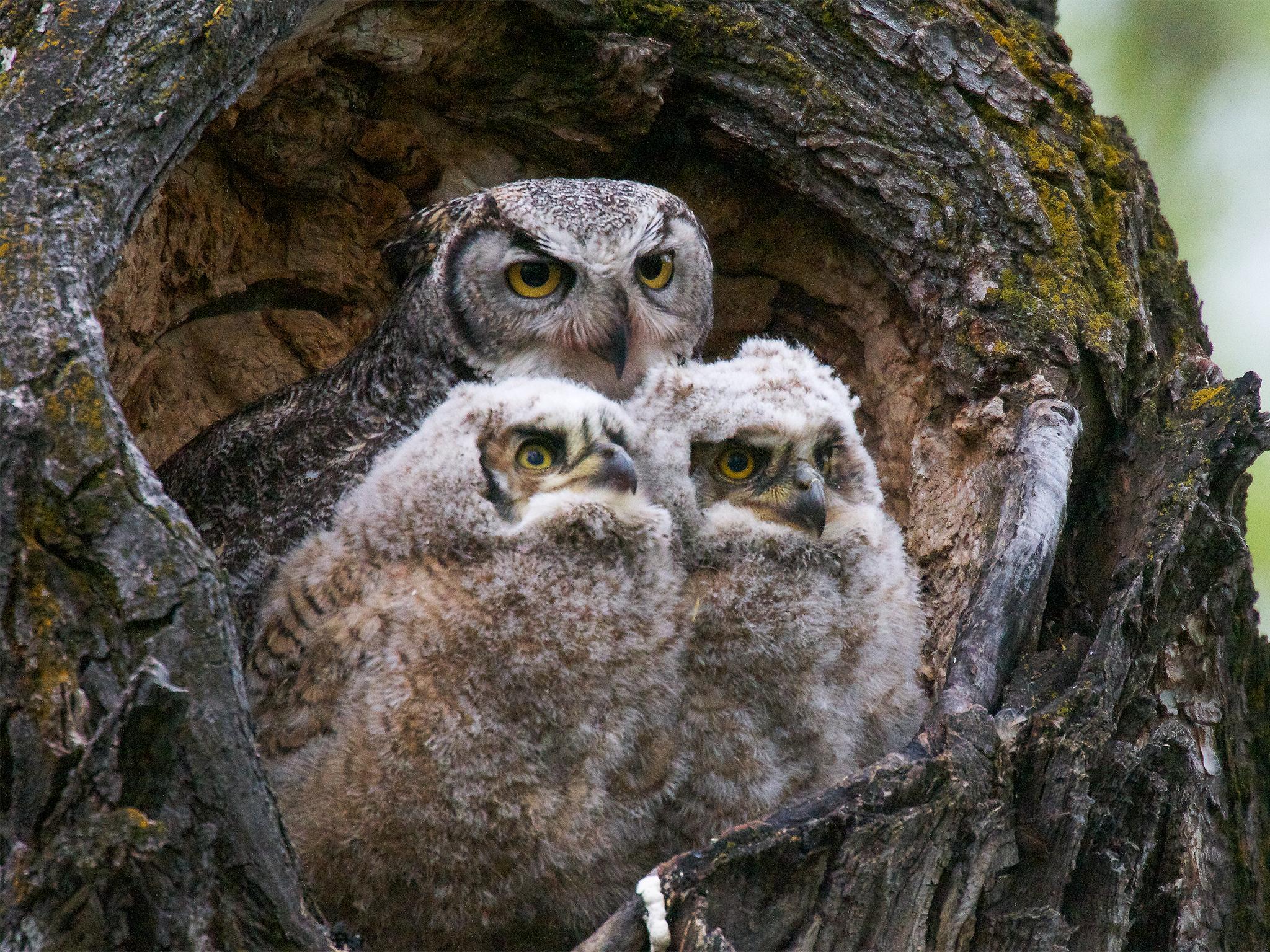 Ask Your Weird Animal Questions Is It True Bird Moms