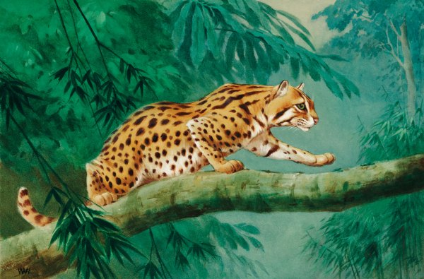Earliest Cat Domesticated In China Leopard