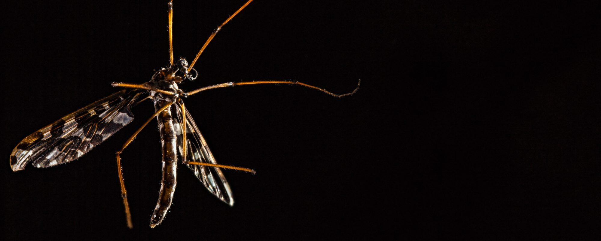 hight resolution of fly larvae body diagram