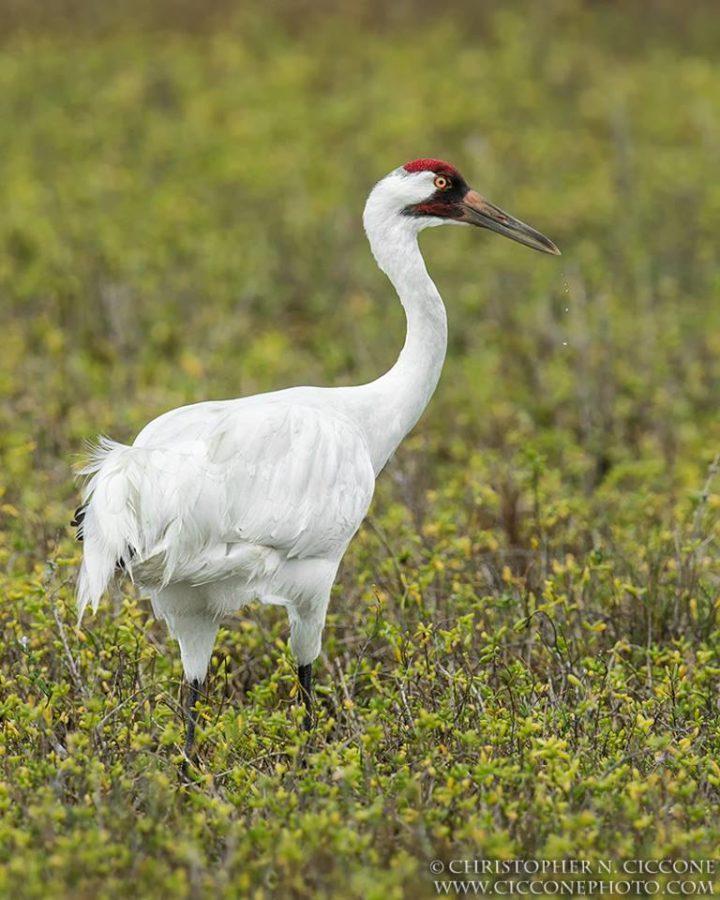 top 25 wild birds