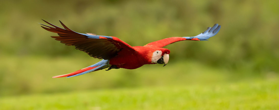 top 25 wild bird