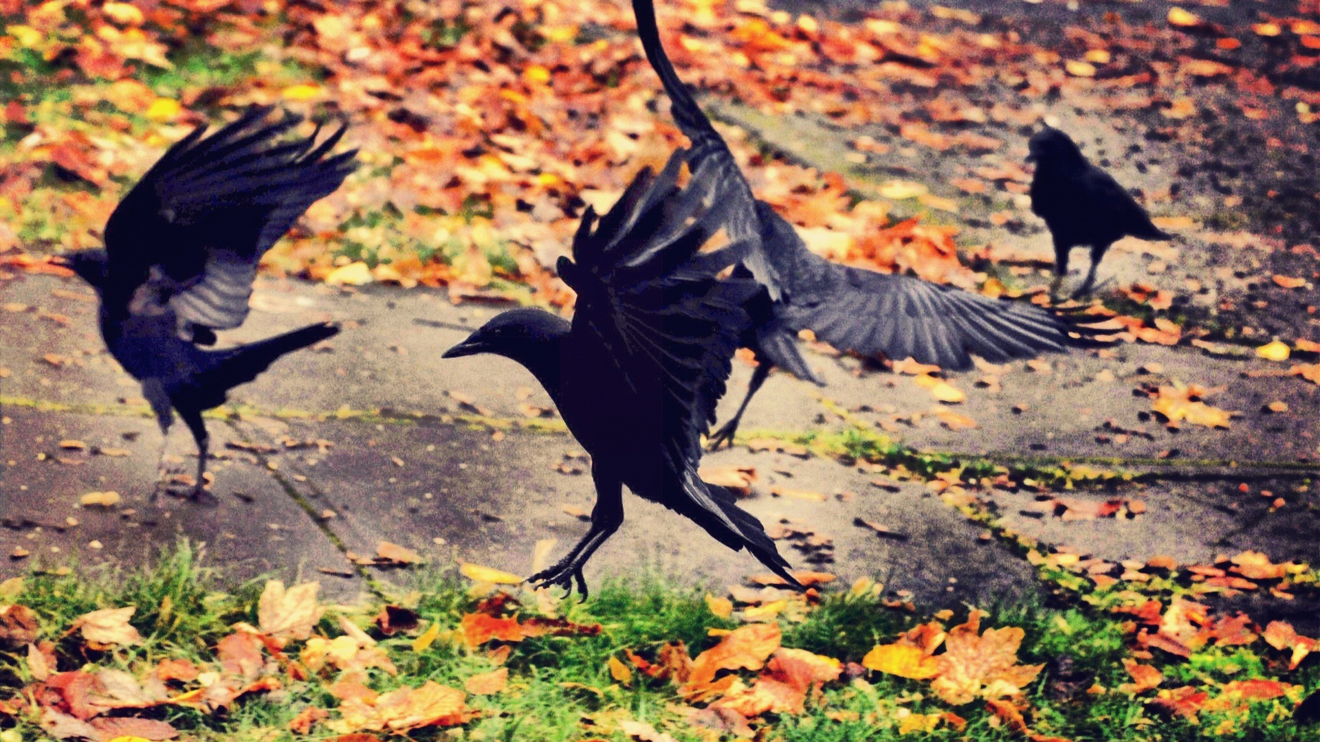 A Surprising Look at Crow Family Life – Cool Green Science