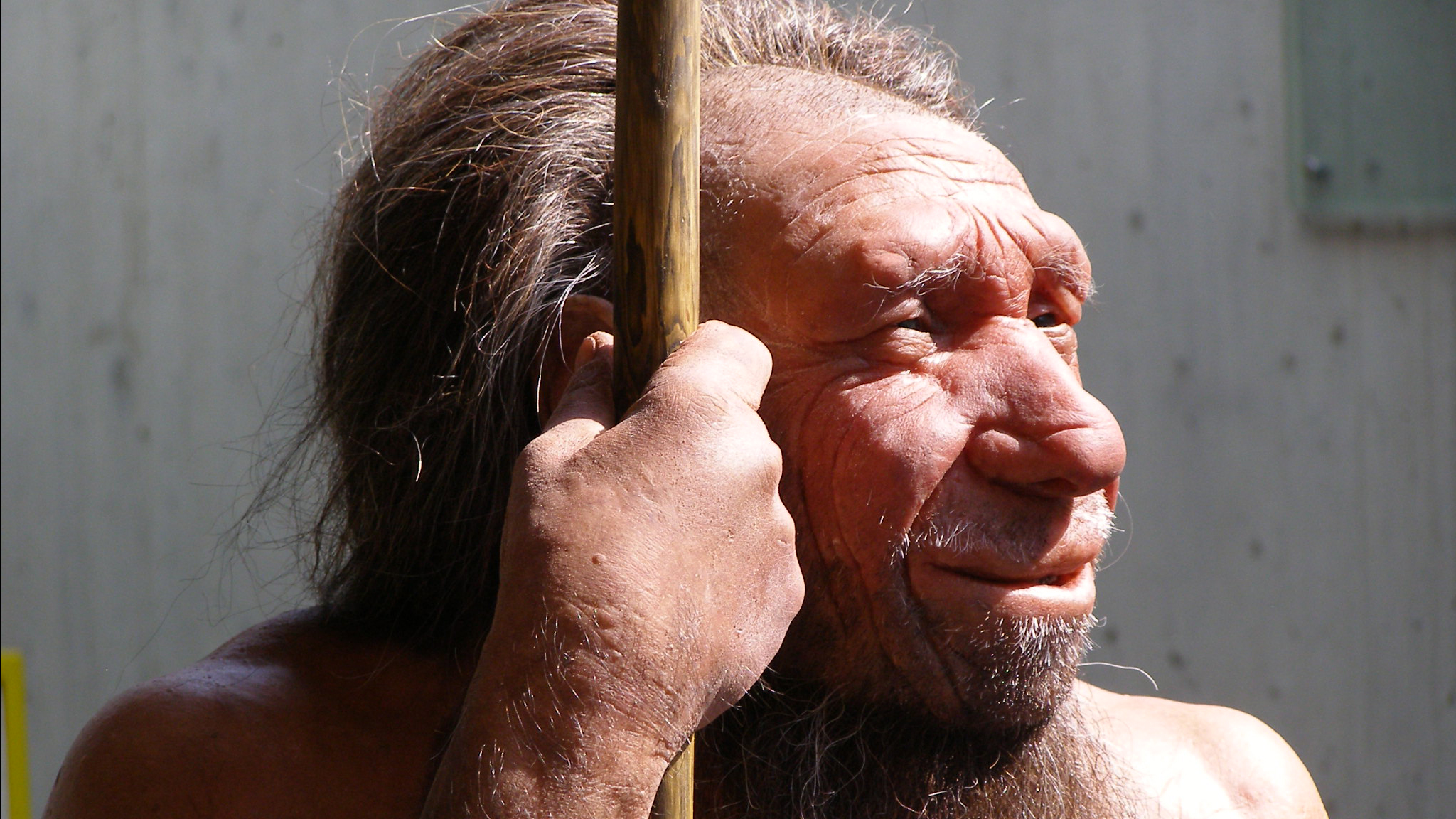 Neanderthal Museum exhibit (in Germany). Photo © Erich Ferdinand / Flickr through a Creative Commons license