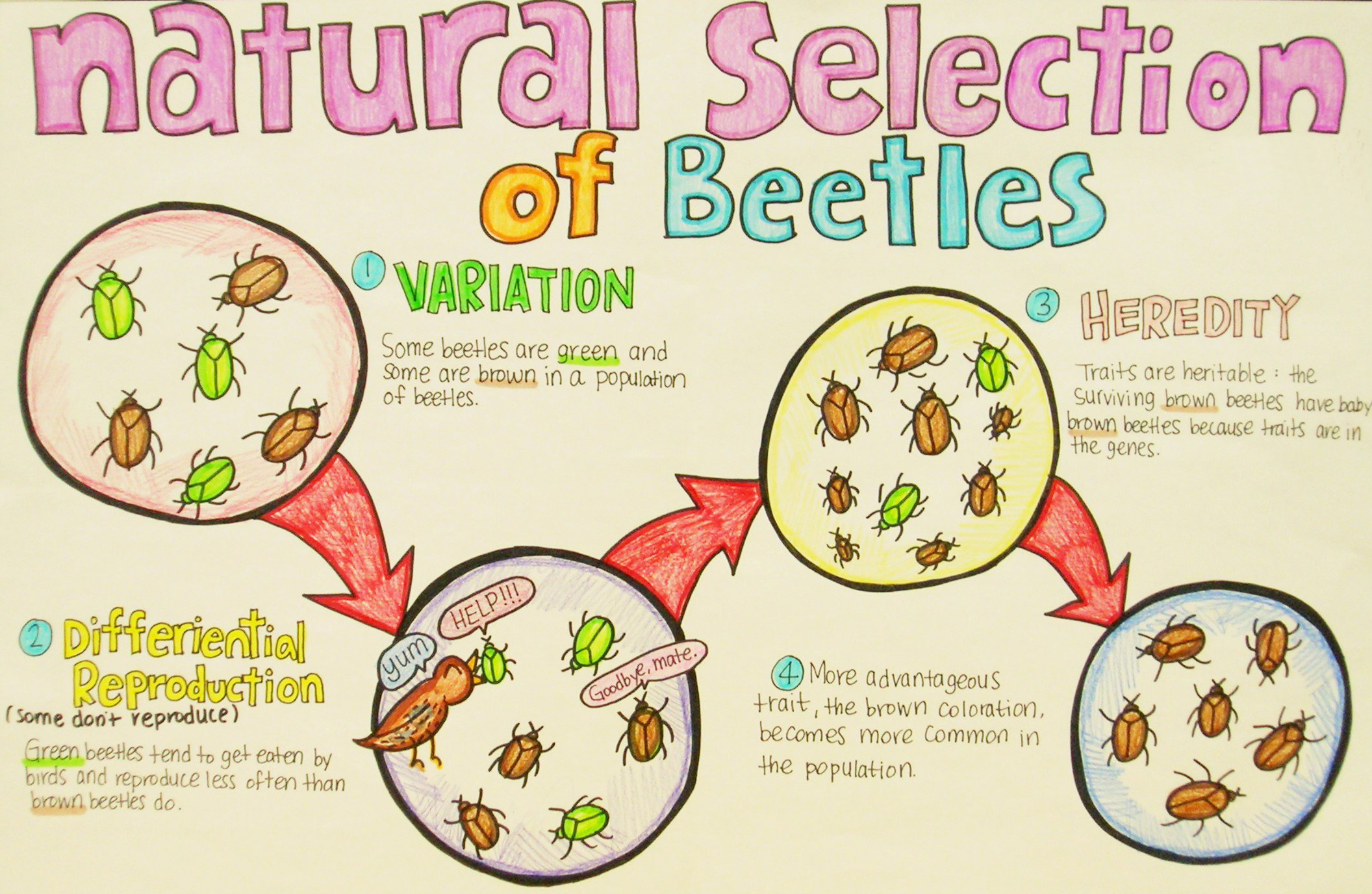 Natural selection example 9th grade science poster. Photo © Enokson / Flickr through a Creative Commons license