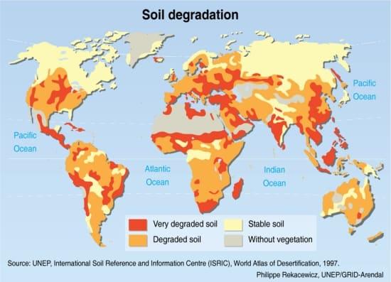 Waarom is een goede bodem belangrijk?
