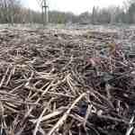 Mulch in het Voorjaar: Extra Werk of Natuurlijk?