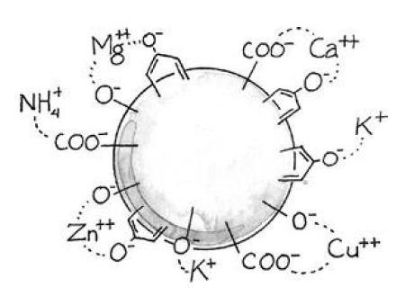 Humus: zo onbekend maar ozo belangrijk