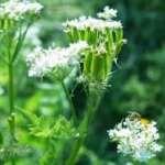 Is de Combinatie Mulchen en Planten Spontaan Laten Uitzaaien Mogelijk?