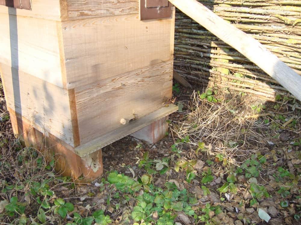 Onze Bijen in de Peronekast