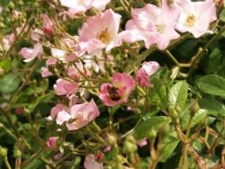 Bijen en Hun Invloed Op Uw Manier van Tuinieren