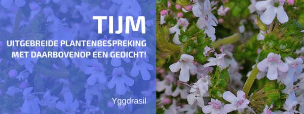 Plantbespreking: Echte tijm (Thymus vulgaris L.)