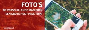 Foto's, Groot en Klein, Zijn Belangrijk in de Tuin!