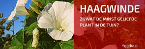 Tuinbewoners, Graag Gezien of Niet: Haagwinde