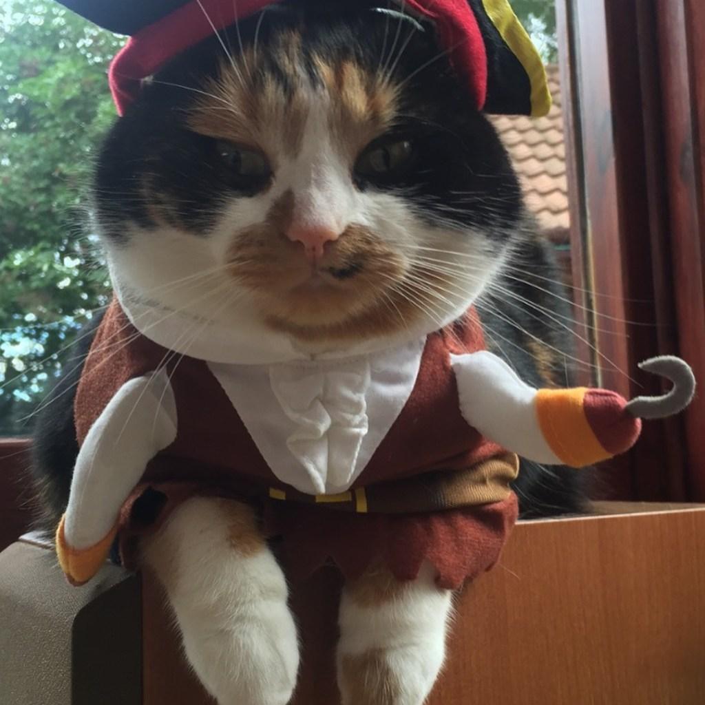 Jessie dressed as Pirate, beware!