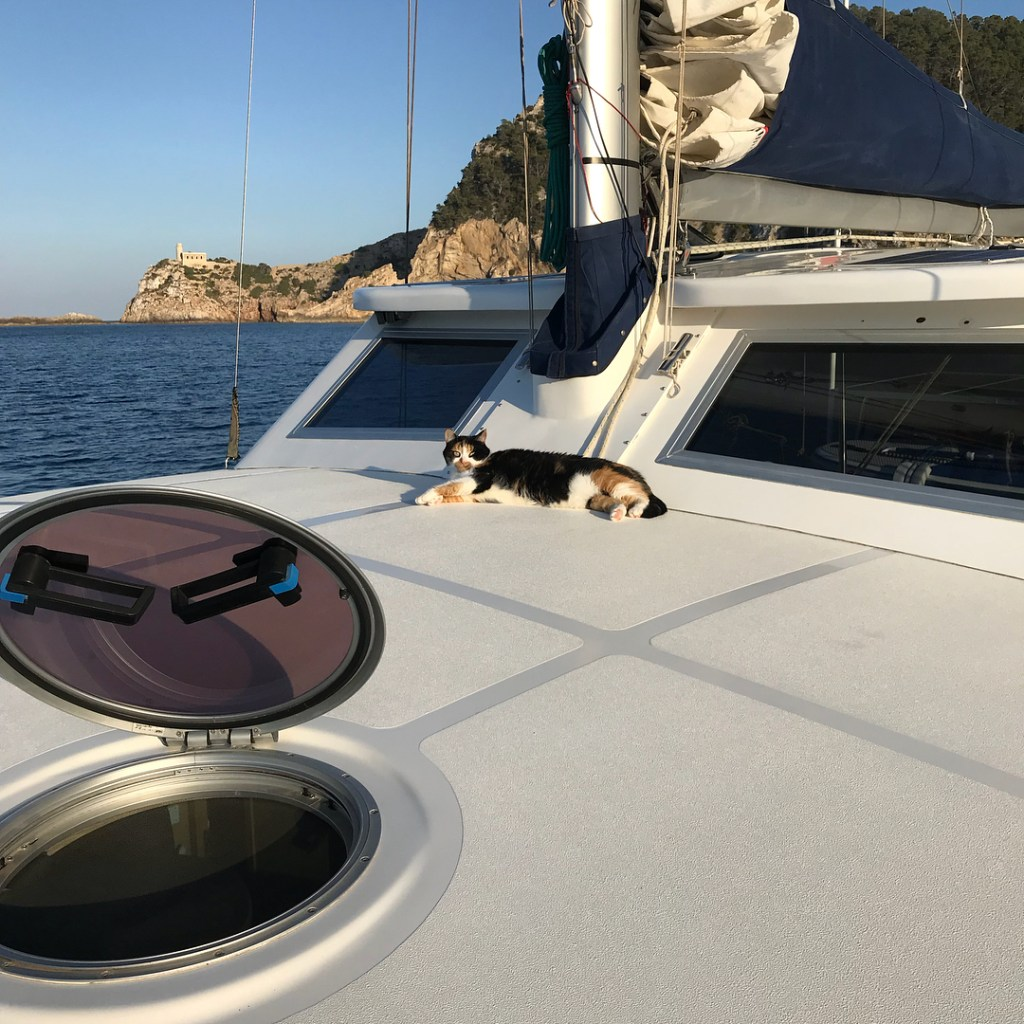 Sailing with a cat that keeps an eye on the tide and the wind