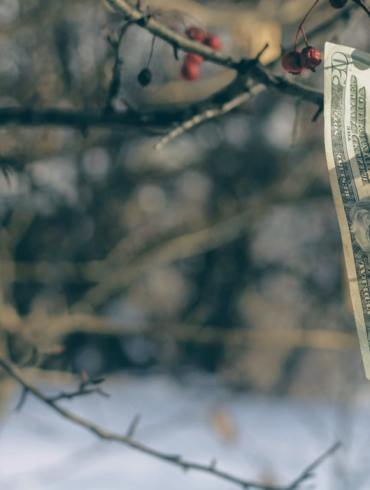 Money may not grow on trees, but putting any savings you have in a high-yield savings account will help you grow your money a lot faster than your standard savings account. A high yield savings account is offered by an online FDIC-insured bank and provides users with an above-average APY with lesser or (in some cases) no fees or minimums to apply.