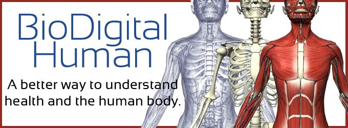 The Biodigital Human