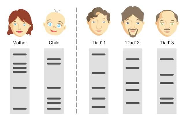 Paternity tests - How do they work and how accurate are they?