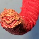 酒井ゆうじ造型工房『23cm シン・ゴジラ』 赤のグラデーション塗装 その2・尻尾の先端の塗装