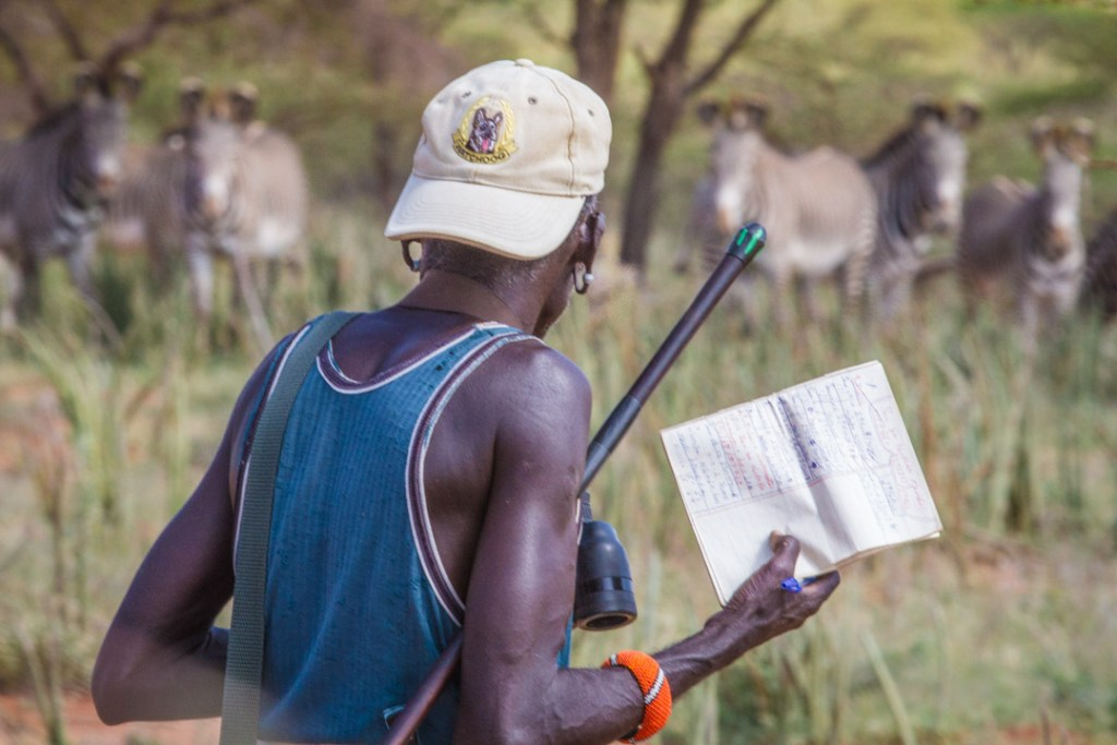 Samburu scout working for Grevy's Zebra Trust   Photo by Nelson Guda © 2019