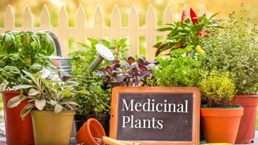 گیاه دارویی با خواص جادویی