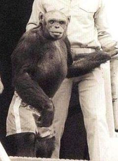 oliver_chimpanzee