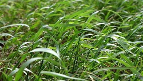 企業支持農業─新竹物流參與契作本土小麥! - 上下游的工作日誌