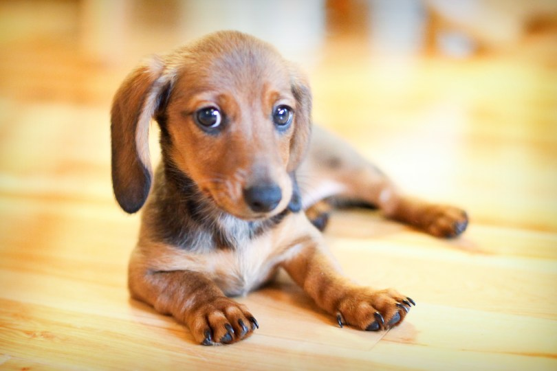 Celebrating National Dog Day with Nextdoor | Nextdoor Blog