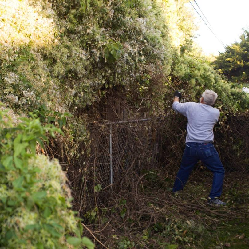 A neighbor cuts and pulls down the overwhelming brush.