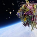 Exobiotanica: Flowers in Space