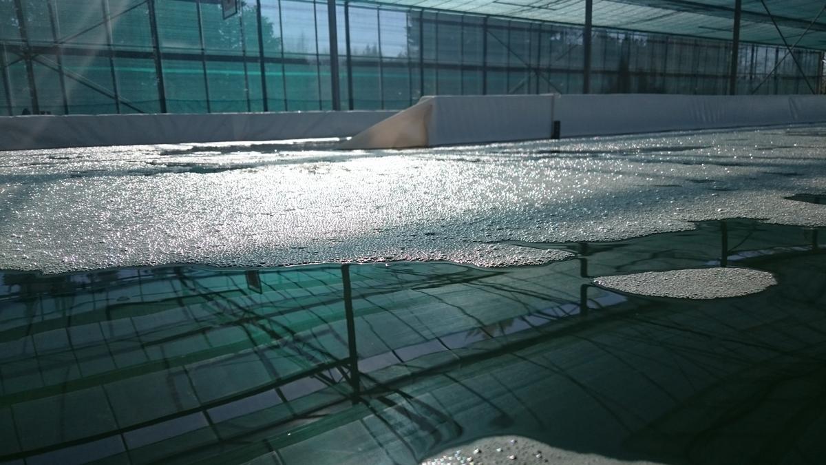bassins-spiruline-algoa-analyse