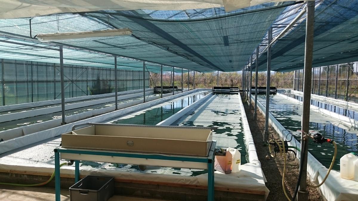 bassins-spiruline-algoa-dro
