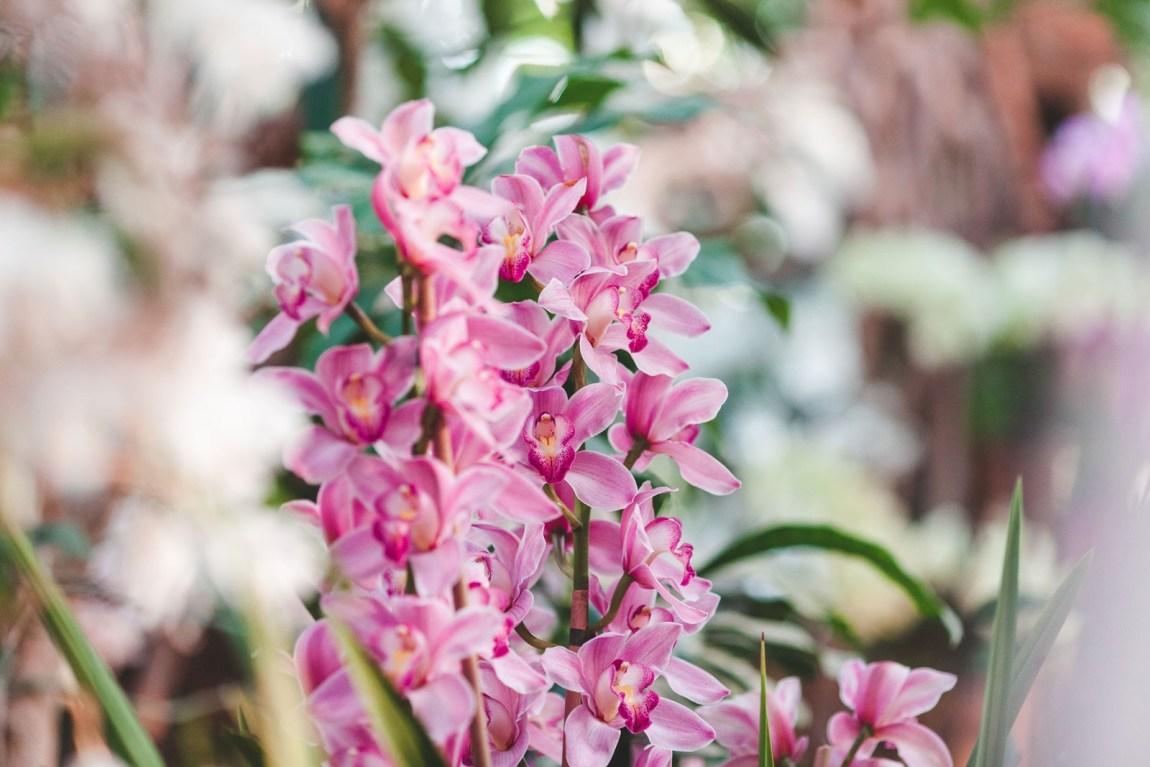 paris, ninaah bulles, orchidée, fleurs, exposition, jardin des plantes, milles et unes orchidees