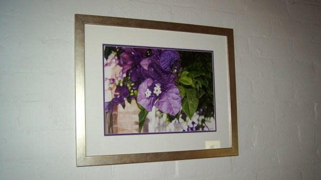 Bougainvillea Watercolour Framed