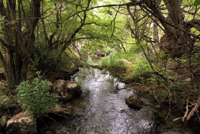 Ein Fluss im Golestan Nationalpark