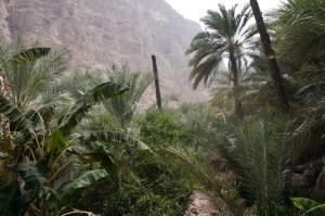 Dichtes grün im Wadi