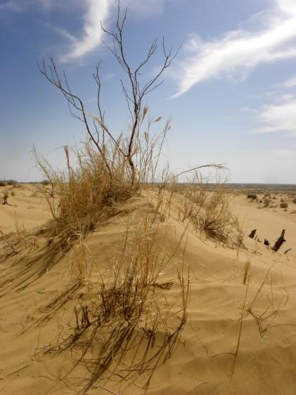 Sanddünen in der Karakum