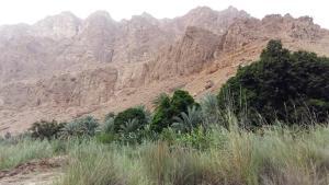 Gärten und Gebirge im Wadi Tiwi