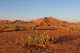 Sonnenuntergangsstimmung in der Rub al Khali