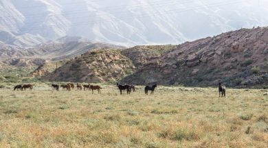 Rückfahrt nach Bishkek
