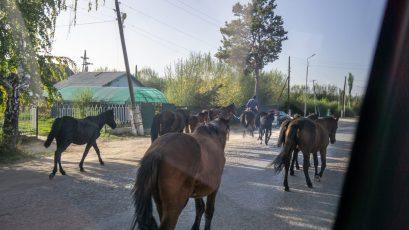 Pferdeherde entlang der Straße